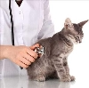 Ветеринарные клиники в Оловянной